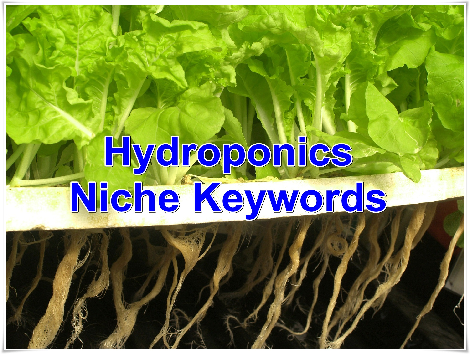 Niche keywords research Hydroponics 2019 Instant Download